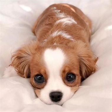 温柔长什么样?全在这只狗狗眼里啦!