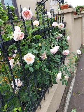 赏心悦目!别人家的院子太美了,这就是向往的生活