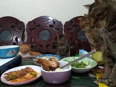 铲屎官开饭了,家里的猫们火速赶来围观,每一只都紧张到不敢睁眼…