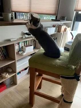 地震后,网友家的猫做出这个举动,笑喷!