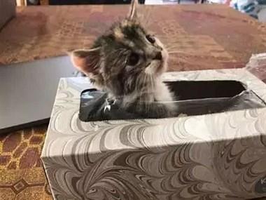 小奶猫不见了,主人找了大半天都要急哭了,最后发现…