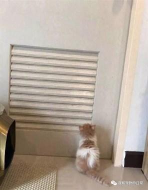 黏人的喵,每次去卫生间都会充满爱意的窥视你!