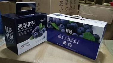 【招聘】招蓝莓采摘工人