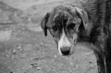 给流浪狗处理伤口,它竟然没一点反应!它早忘了什么是痛…