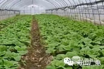 """舟山500亩绿色田园""""五一""""开放!采摘寻宝刷爆朋友圈"""