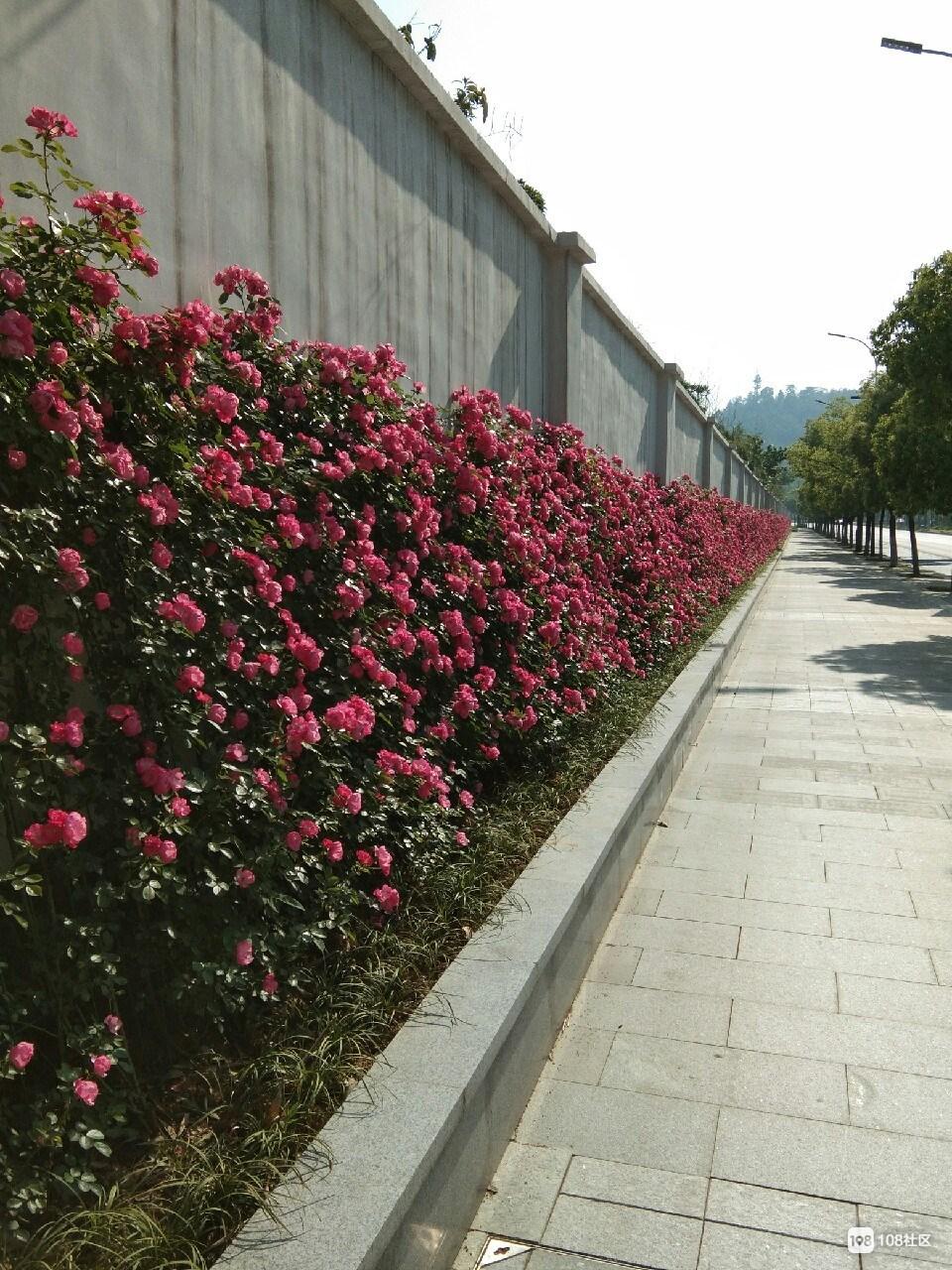 又一网红打卡地?舞阳街有一堵特别的墙,不少人注意到