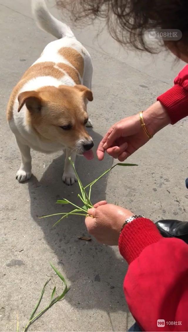 人家狗抢着吃肉  邻居家两只狗却争着吃草...