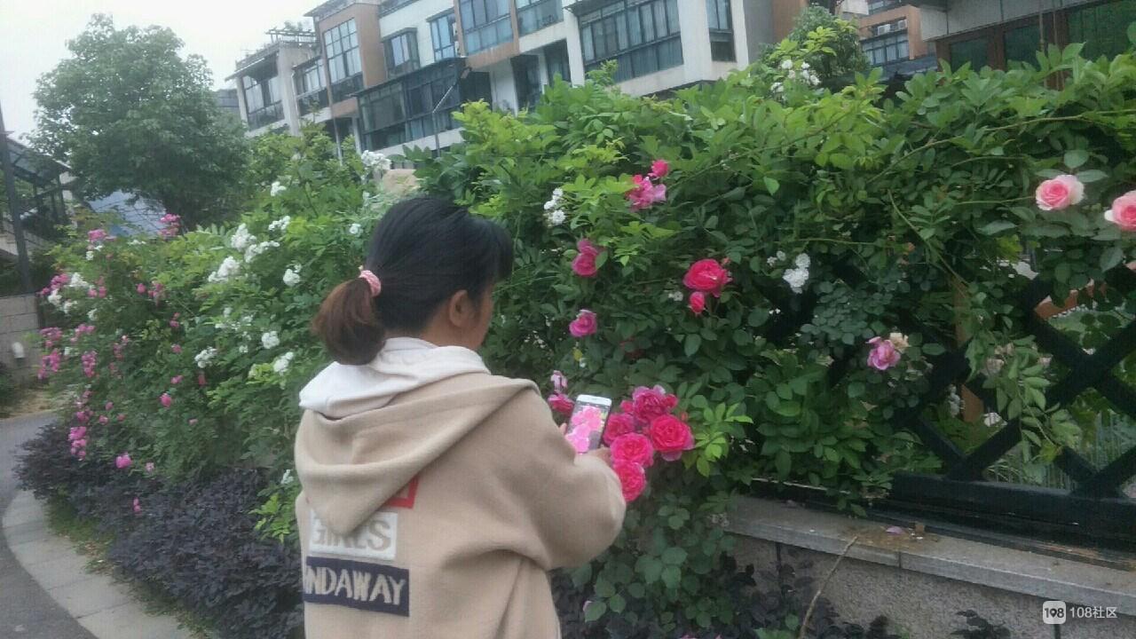 """德清某小区绿化美景成""""网红"""",业主兴奋:跟住花园似的!"""