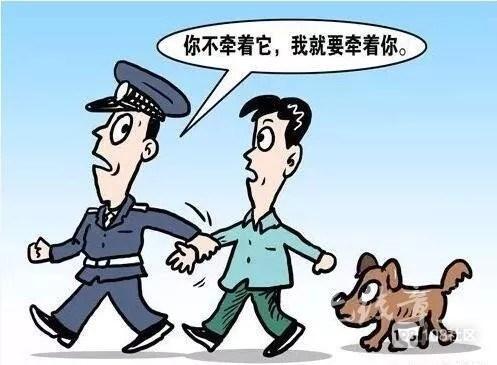 """遛狗不拴狗绳,""""松狮""""咬人普陀一狗主人为狗买单1600元"""