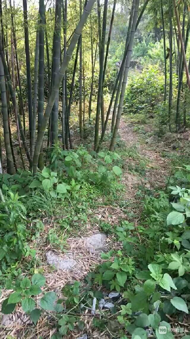 世外桃源!这是金塘外婆家的山路 上面住的都是百岁老人!