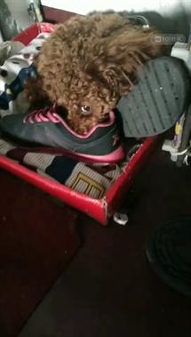 鞋子香吗?