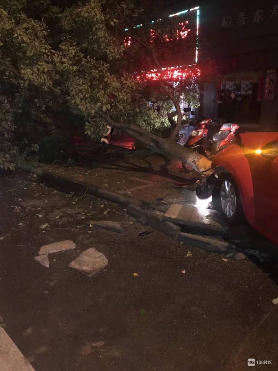 岱山一女司机开车撞倒大树  吓得连连尖叫!