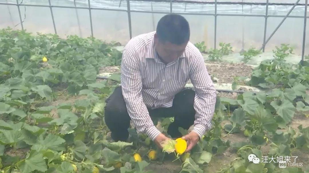 今年本地黄金瓜、西瓜、杨梅全难产 吃货们要伤心了!