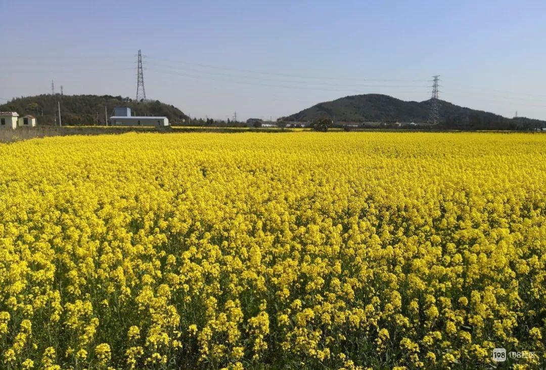 休闲、骑行、赏花!定海将建设功能一体的田园景观!