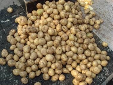 家公卖剩下的小土豆给了我,这样简单加工下,太好吃了吧!