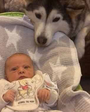 别再说二哈不能带小孩了,人家把孩子奶的白白胖胖!