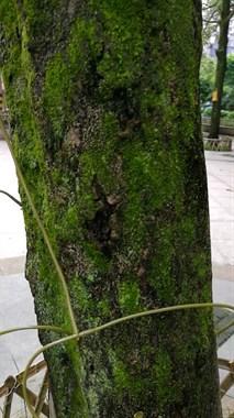南平街头现诡异场景,好好的树竟被插上管子干这事