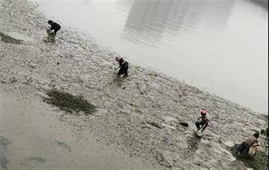 最近诸暨这里出现超多螺蛳,有人一天摸好几桶!