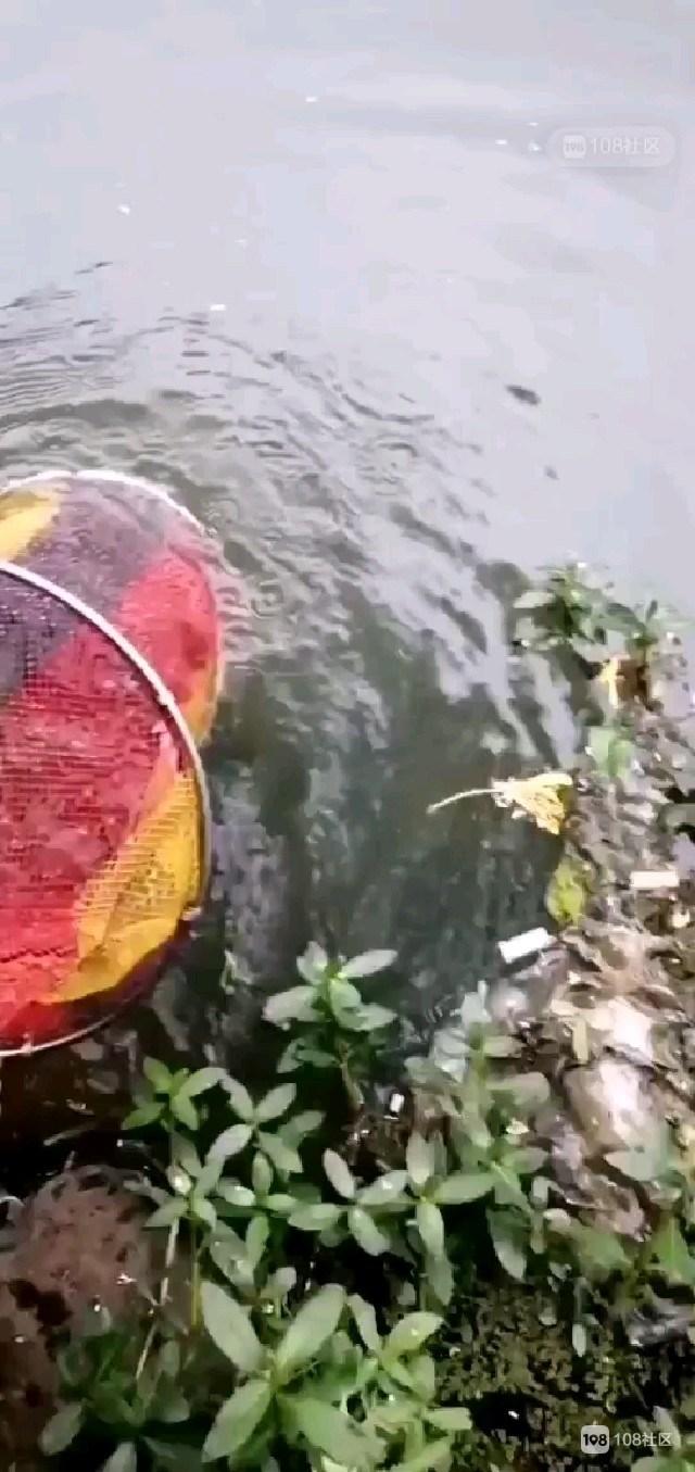 出师大捷!天姥山迎月坞手竿收获小条鱼100来条