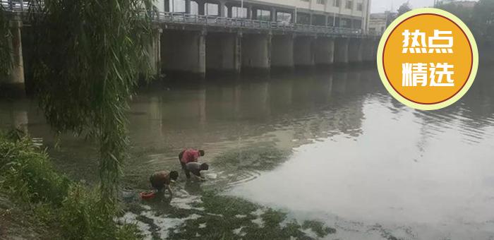 发财了!浦阳江里好多人在挖这个,一天好几桶