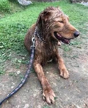 """狗子穿上""""黑丝袜"""",不光显瘦,还耐脏"""