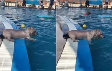 这只狗子的热身运动可真是不一般!
