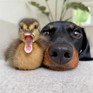家里竟然成了动物园,都怪狗子性格太好!