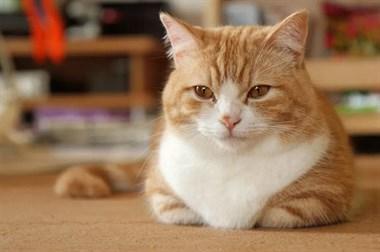 我家猫咪弯爪爪的样子实在是太太太太太太太太太太可爱惹~