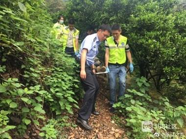 衢州一女子为了采枇杷,不慎从树上坠落摔成重伤!