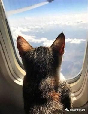 猫咪坐飞机坐出了不一样的境界!