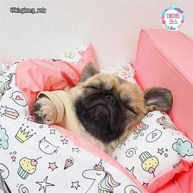 你永远无法想象狗砸下一秒会睡在哪~