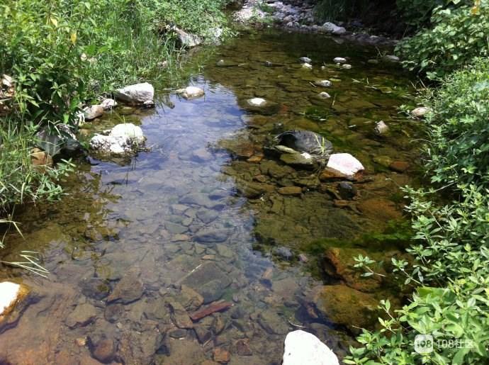 前几天去了趟三坑桥下村,这一幕让我震惊!小溪里…