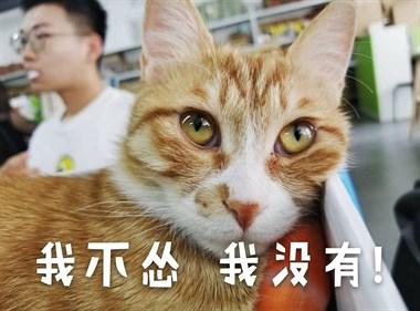 猫都是窝里横:在家猛如虎,在外怂成狗!