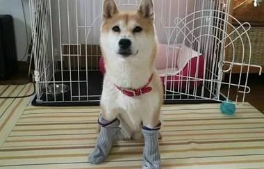 日本铲屎官示范如何轻松洗狗,网友:我还是洗只假狗吧!