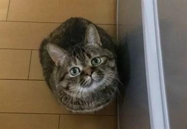网友忙着弄夜宵没理猫,猫竟然做出这样一个举动,很心机了!