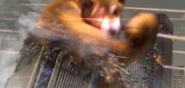 这只被爸爸带大的柴犬真让人心疼!