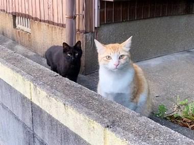网友在街边跟猫咪搭讪,结果猫男友迅速赶来护驾~
