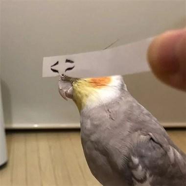 用一张纸条给鹦鹉加上有趣的眼睛