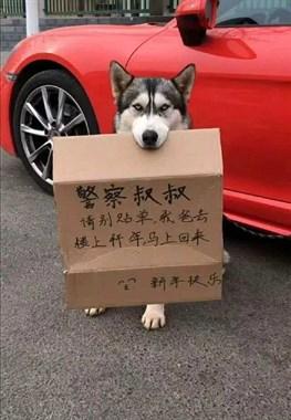 天真的狗狗