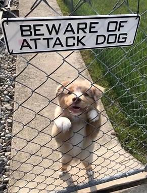 """内有猛犬?我看内有""""萌""""犬还差不多!"""