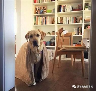 主人做饭不小心掉了个盘子,狗狗随后做出的举动亮了!