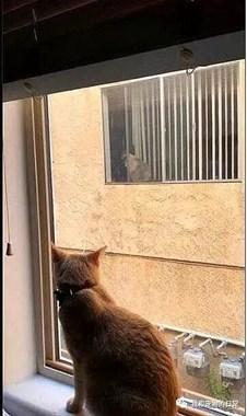 猫咪每天都在窗口等待邻居家的猫,最后却发现......