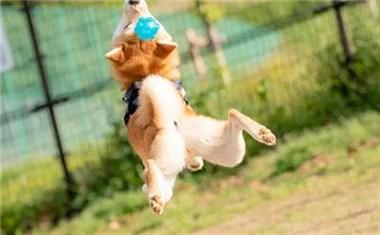 这的狗绝对是世界上最幸福的:随地呼呼大睡,路人会绕道而行!