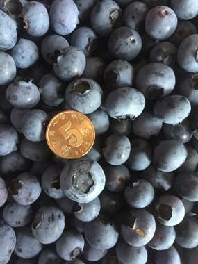 喜欢吃蓝莓的看这里