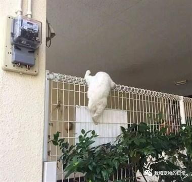 开始以为猫咪是被卡住了,结果走近一看......
