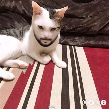 在猫身上试了试那个可以变换性别的滤镜,结果···