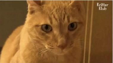 """橘猫居然把自己饿成""""纸片猫"""",这是受了多大的委屈啊!"""