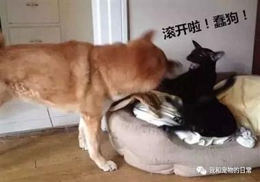 见过狗窝被抢的,但没见过被抢了还那么…哈哈!