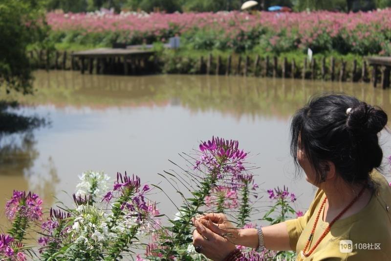 荆溪花又开,人在画中游。。。