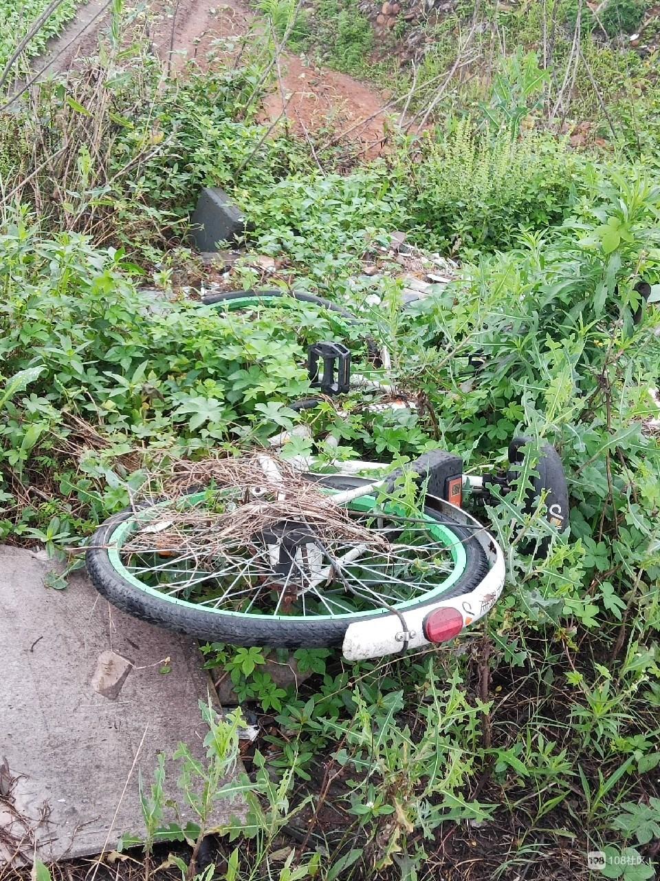 野草丛中的自行车